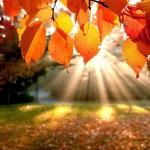 herfst-wallpaper-met-oranje-bladeren-en-zonnestralen